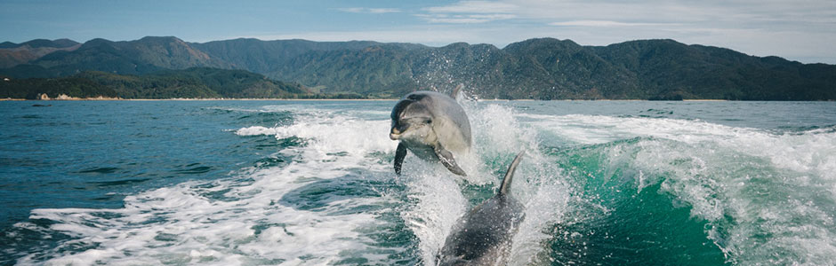 spectator_go_user_stories_dolphins