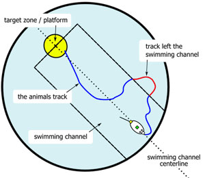 water maze swim channel