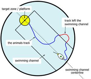 Behavioral Research Water Maze Behavioral Research