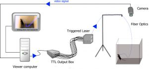 Optogenetics scheme