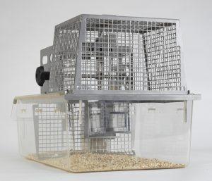 Rat-MoCage Guard rat - home cage view